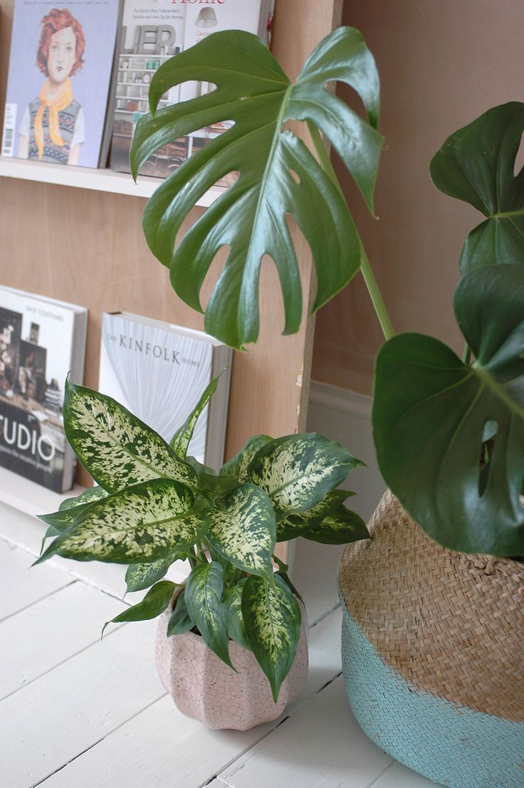 Plants in my home office - pink plant pot: Anthropologie / Belly basket: Olli Ella