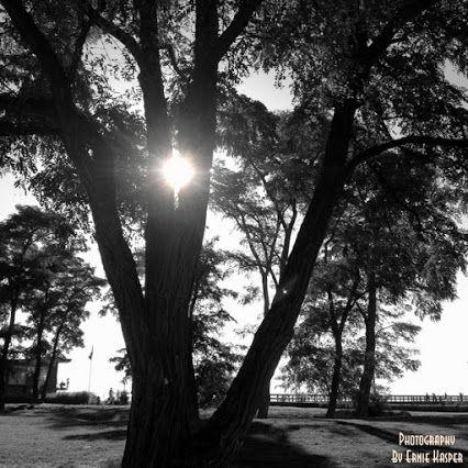 #blackandwhitephotography  By Ernie Kasper #tree   #blackiespit