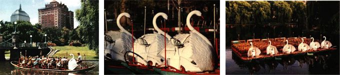 Swan boats.  About as close as I'll come to birds.