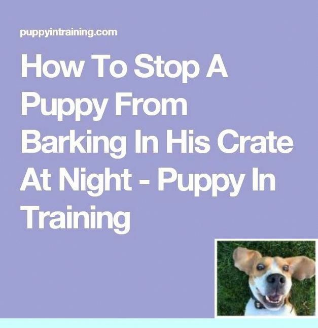 1 Potty Training Dogs 101 And Puppy Training Kit Check Out