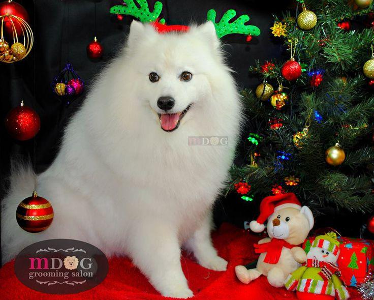 Merry Christmas Suki!