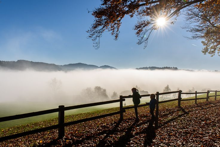 Blick vom Forenwald