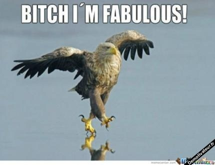 oh yeahhh  bald eagle funny birds funny animals