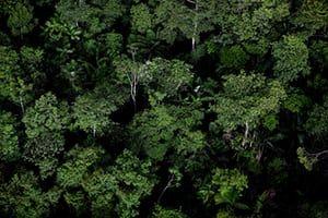 Amazon Rainforest in Amazon Biome on Macapa in May 15, 2010