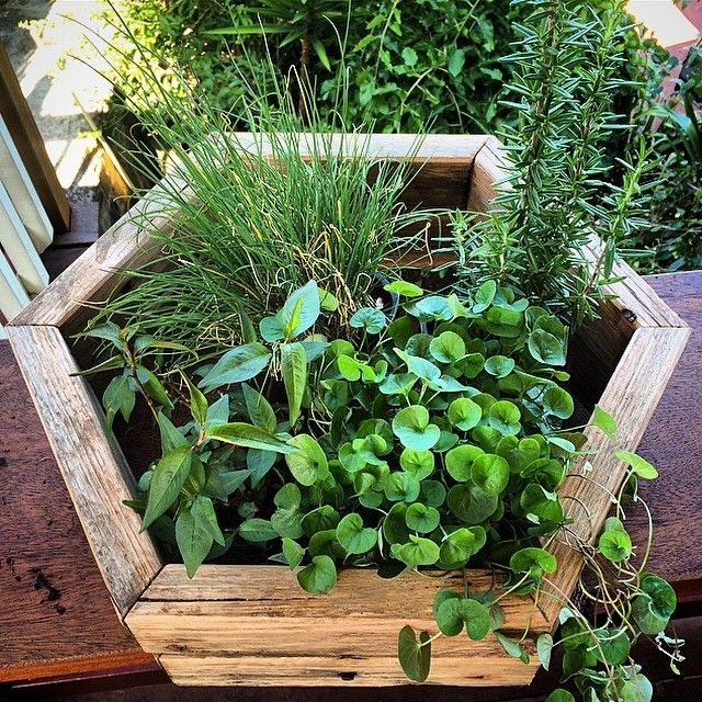 WOOD   DEN ✖️THE HEX PLANT BOX  INDOOR OR OUTDOOR CENTREPIECE FOR HERBS AND PLANTSNEWEST ADDITION TO THE WOOD DEN FAMILY ✖️ W: www.wooddenhome.com  E: den.enquiries@gmail.com
