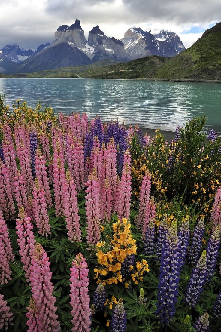 Planning your short trip to Patagonia? Here's your perfect 3-day itinerary for an unbeatable trip!