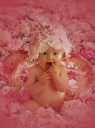 Pink: Bebe, Wahhh Baby, Blossoms Baby, Pinkalici