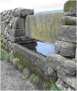 Stone Trough History - Most troughs were built for watering stock and are found both within and along the edges of fields. They can also be found in the enclosures attached to field barns where they held water for over-wintering cattle. Many troughs are set into field walls so that they can serve stock in two fields; these often have a sandstone divider or bars across the middle, as with the trough pictured.