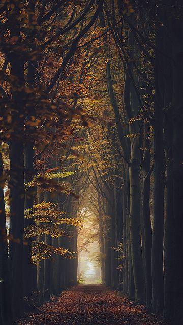 Autumn lane, Bruges, Belgium