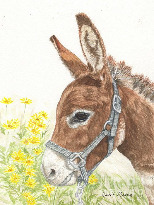 Miniature donkey, Red Satin Doll, watercolor painting by artist Carol Moore.