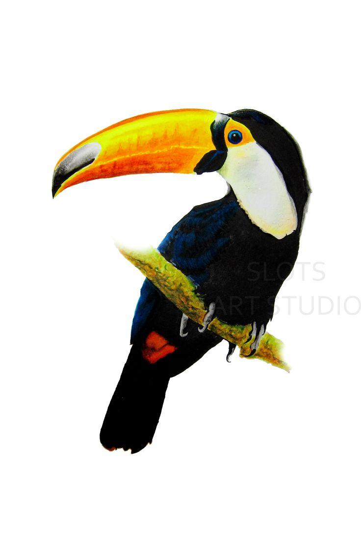 Toucan Bird Drawing Toco Toucan Drawing   ...