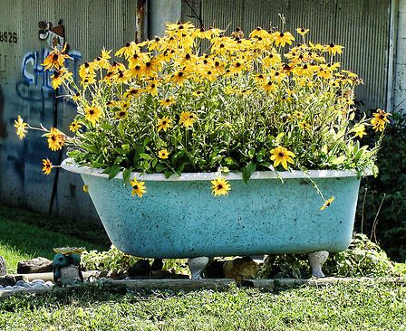 Awesome Using An Old Bathtub As A Container In Your Garden.love The Blue Tub With  Yellow Daisies.