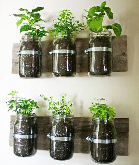 Jar Herbs (I have lots of Jars)