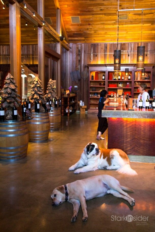 This is precisely why you should never hire dogs to work the tasting room: Bernadette (St. Bernard) and Gus (Yellow Lab) welcoming visitors to Lambert Bridge Winery in Dry Creek Valley, Sonoma.