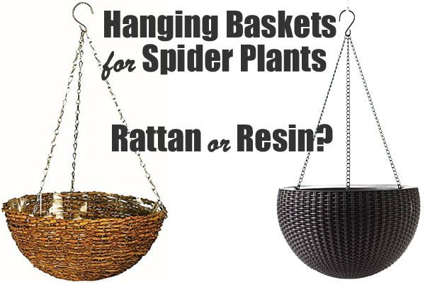 We Compare Rattan and Resin Planters to use as a Spider Plant Hanging Basket - What are the Advantages and Disadvantages of Both?