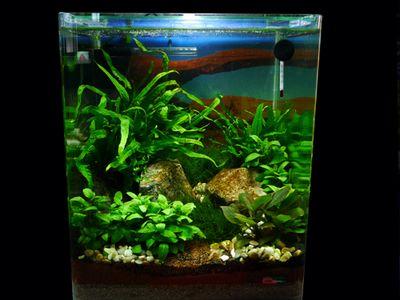 17 best images about nanos on pinterest plants aquarium for Garden aquarium design
