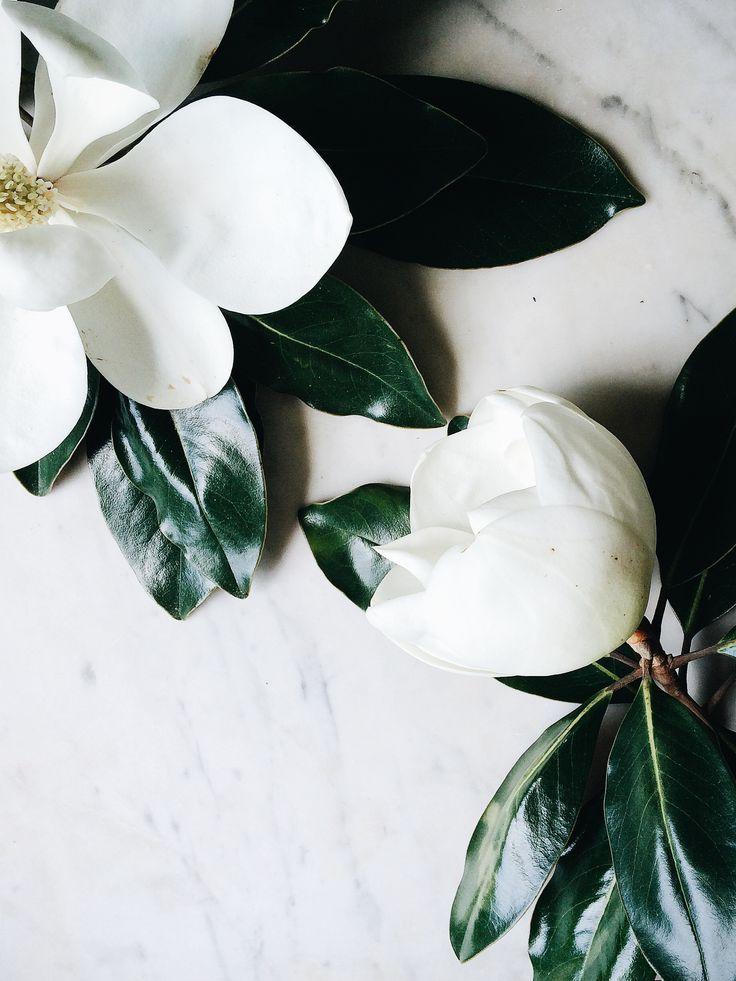 Magnolias #flowers
