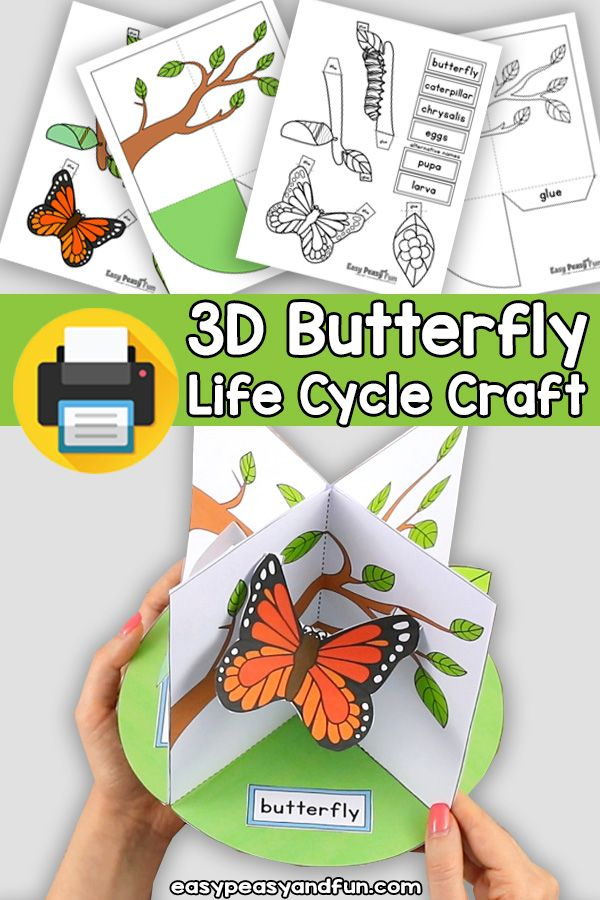 3d Life Cycle Of A Butterfly Craft Paper Model Diorama In 2020