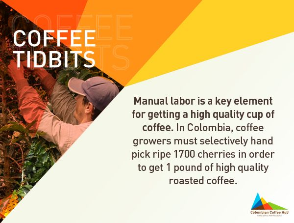 All this work everyday! Get more info of Colombian growers at www.colombiancoffeehub.com