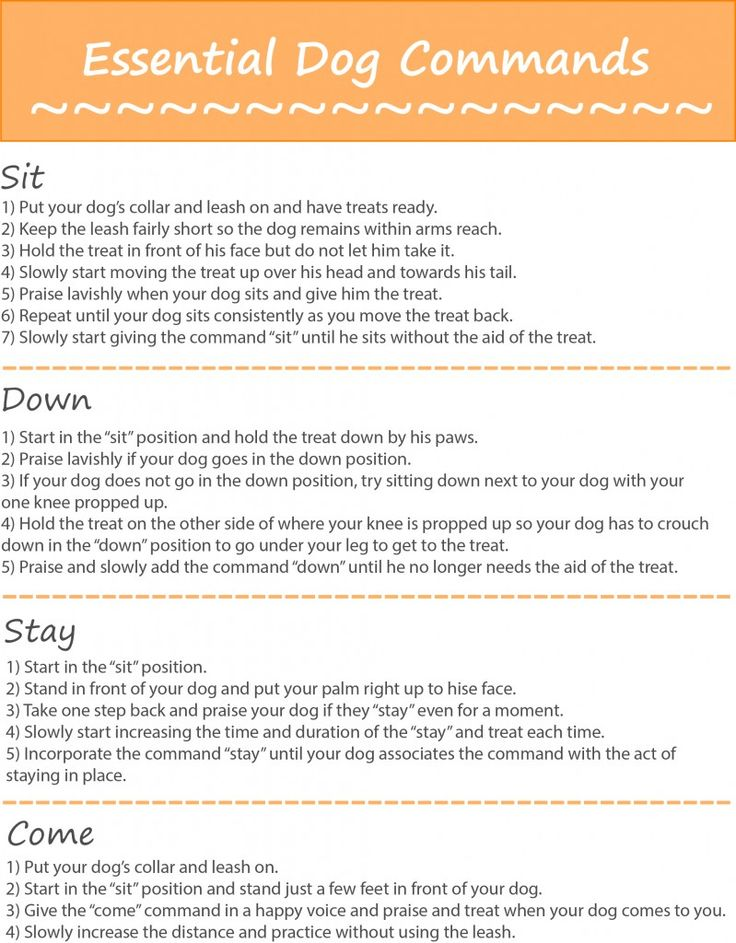 Printable List of Essential Dog Commands