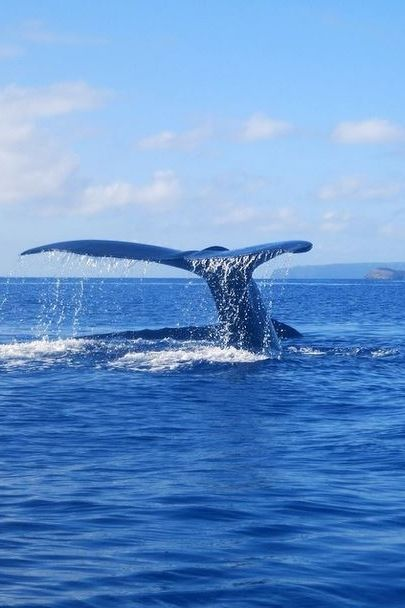 Ever seen a humpback whale? At Andaz Maui at Wailea Resort, you can spot the beauties by kayak or outrigger canoe.