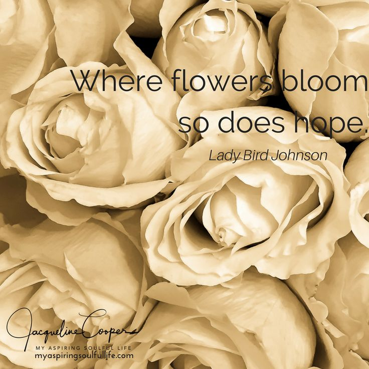 Hope For The Flowers Quotes Daily Inspiration Quotes