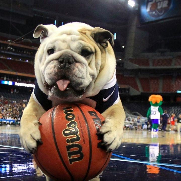 12 best Pet Sports Fans images on Pinterest | Animal ...
