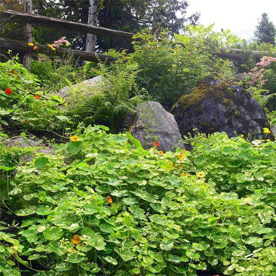 21 Landscaping Ideas For Slopes: 124 Best Plants For Banks, Hillsides And Slopes Images On