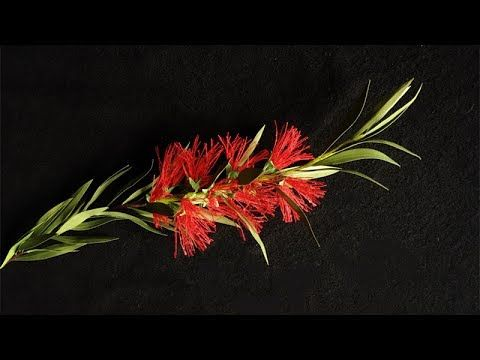 ABC TV | How To Make Callistemon Citrinus Paper Flower - Craft Tutorial