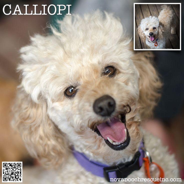 Calliopi