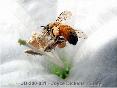 cJD-300-031 - Joyce Dickens - Busy - Art Revu