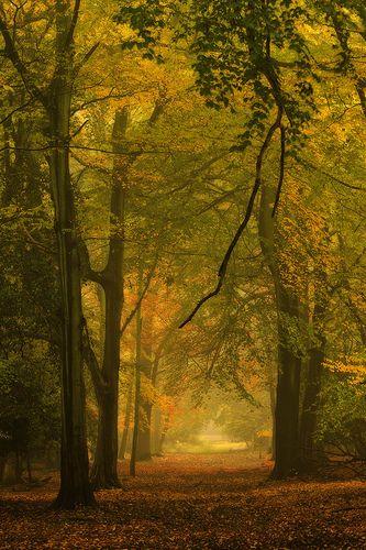 Autumn, Ashridge, England