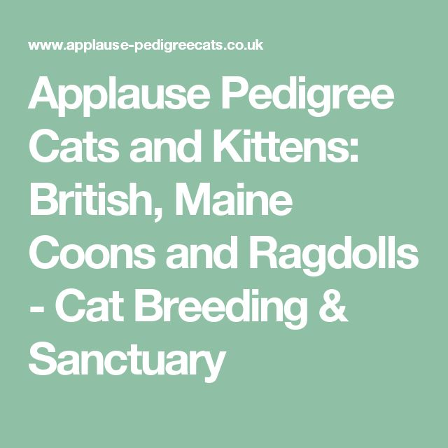 Applause Pedigree Cats and Kittens: British, Maine Coons and Ragdolls - Cat Breeding & Sanctuary
