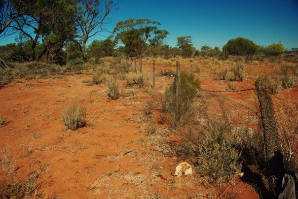 Rabbit Proof fence, more than 100 years old, Western Australia