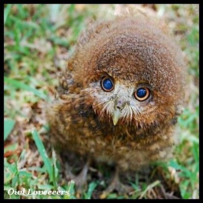 LOVE BABY OWLS** LOVE THE BLUE EYES ★★