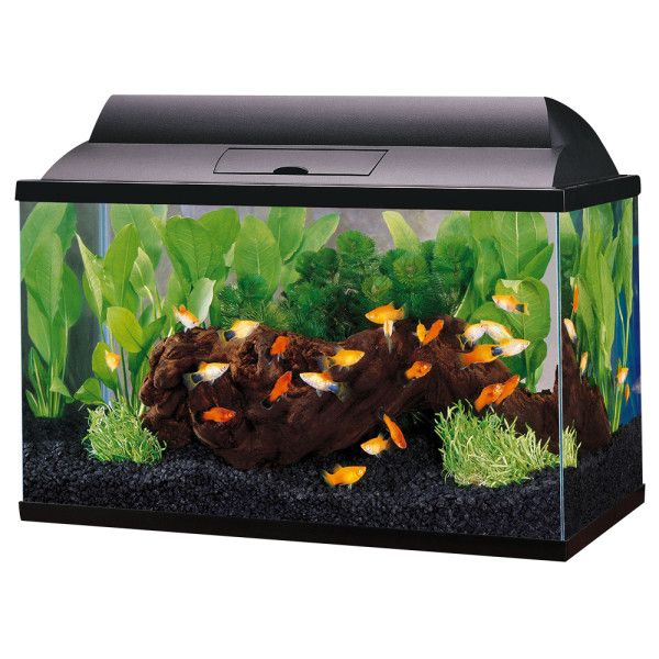 Top fin 5 5 gal aquarium starter kit aquariums for Fish for a 10 gallon tank