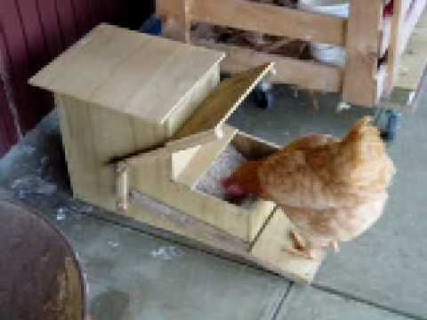 how fabulous is this chicken operated feeder?! great idea to help keep food fresh in wet weather