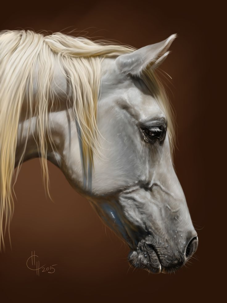 Above is Mayssa 1991 grey mare . Art by Naumovich S.N. drawn in SAI