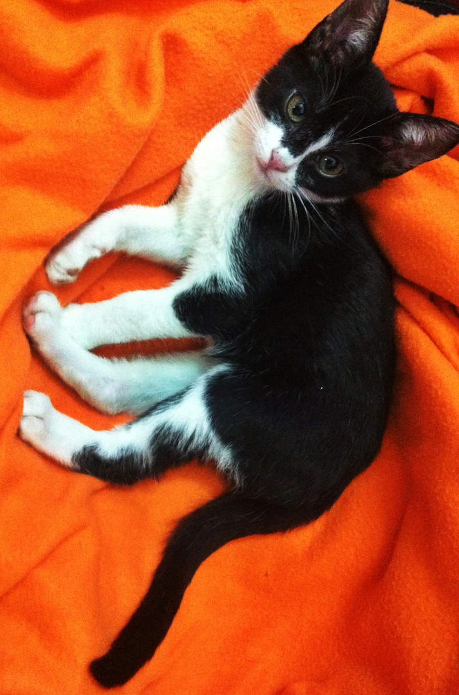 best coisas de gato images on pinterest cat stuff kitty cats