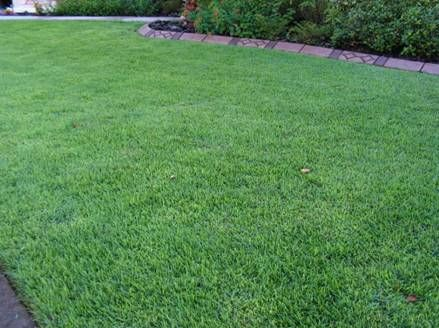 Empire Zoysia Lawn Better Alternative To St Augustine