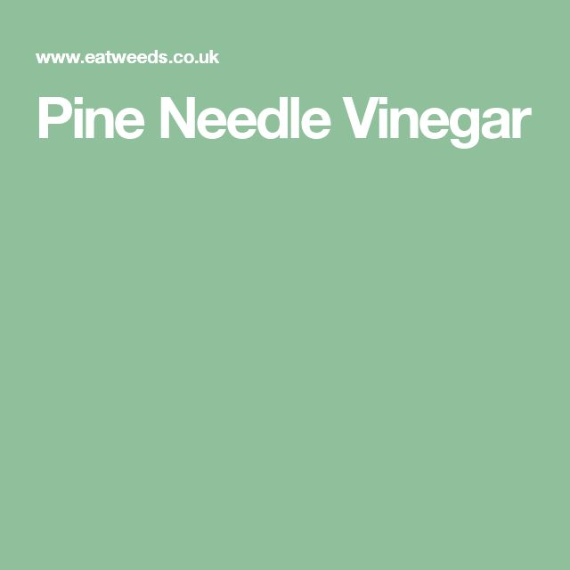 Pine Needle Vinegar