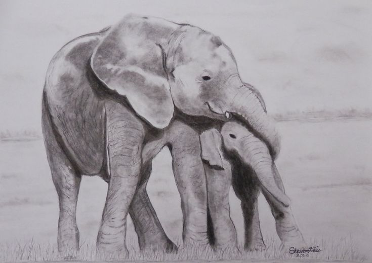 African Elephants A3 Drawing by ArtLover1980, Like this? Then check out the videos over on YouTube at tinyurl.com/ArtLover1980