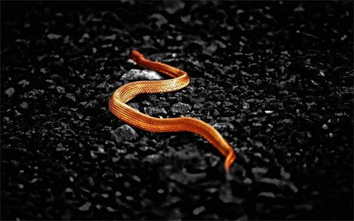 30+ Breathtaking Snake Wallpaper