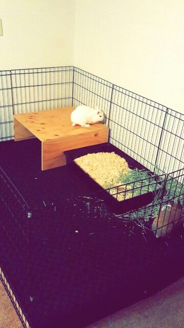 best 25 rabbit playpen ideas on pinterest bunny play. Black Bedroom Furniture Sets. Home Design Ideas