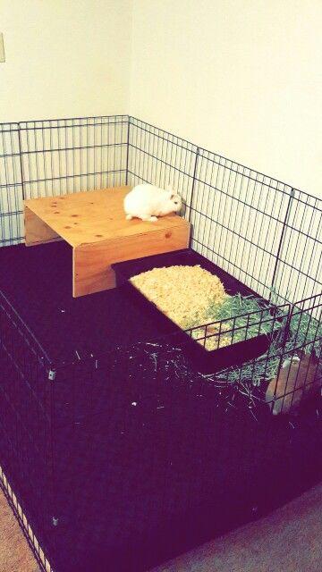 25 Best Ideas About Rabbit Playpen On Pinterest Cages