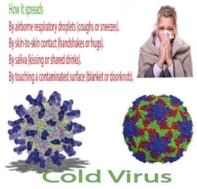 HOME REMEDIES/Recipes TO TREAT COLD and COUGH COMMON COLDS The common cold (also known as nasopharyngitis, rhinopharyngitis, acute coryza, head cold, or simply a cold) is a viral infectious disease of the upper respiratory tract which primarily affects the nose. Signs and symptoms include coughing, sore throat, runny nose, sneezing, and fever which usually resolve in seven to ten days, with some symptoms lasting up to three weeks. Well over 200 virus strains are implicated in the cause of…