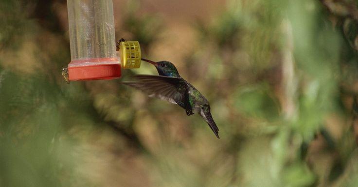 Cómo repelar a las abejas de los alimentadores de colibríes. Los colibríes disfrutan del jarabe de azúcar dulce en los comederos para pájaros, pero esta mezcla a menudo también atrae a las abejas y avispas. Demasiadas avispas alrededor del alimentador evitará que los colibríes disfruten del néctar. Una vez que notes a las invasoras del alimentador, necesitas disuadirlas tan pronto como te sea posible antes ...