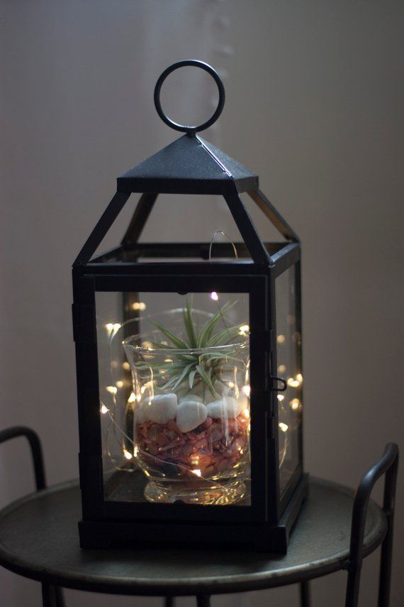 Wood And Metal Air Plant Lantern With Fairy Lights