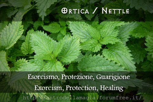 Ortica / Nettle // Esorcismo, Protezione, Guarigione Exorcism, Protection, Healing | L'Antro della magia http://antrodellamagia.forumfree.it/?t=56646475