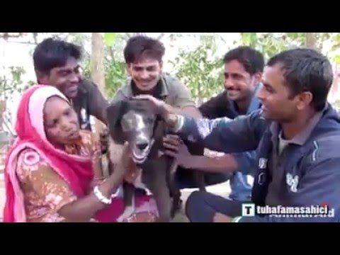Fé na humanidade restaurada. Homem salva um cachorro que foi deixado para morrer. (IMAGENS FORTES)